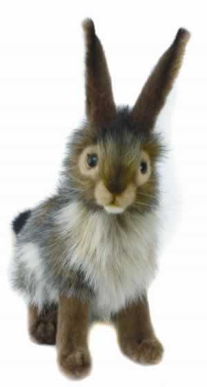 Black Tail Rabbit by Hansa